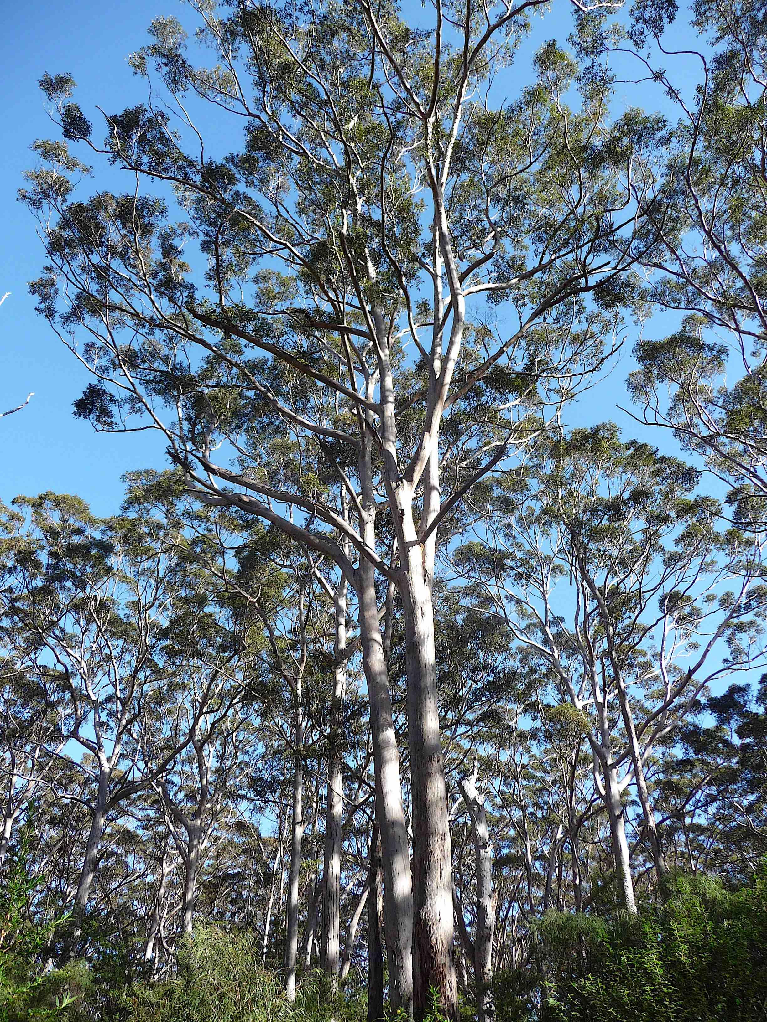 3.Karri forest