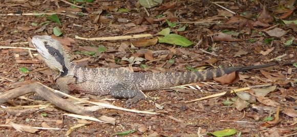 42.lizard