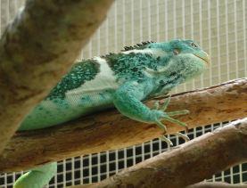 44.lizard