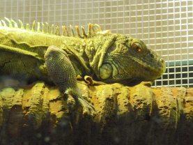45.lizard