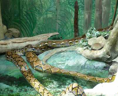 47.snake