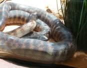 49.snake