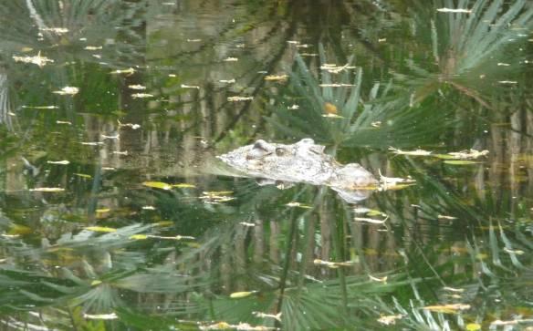 69.crocodile