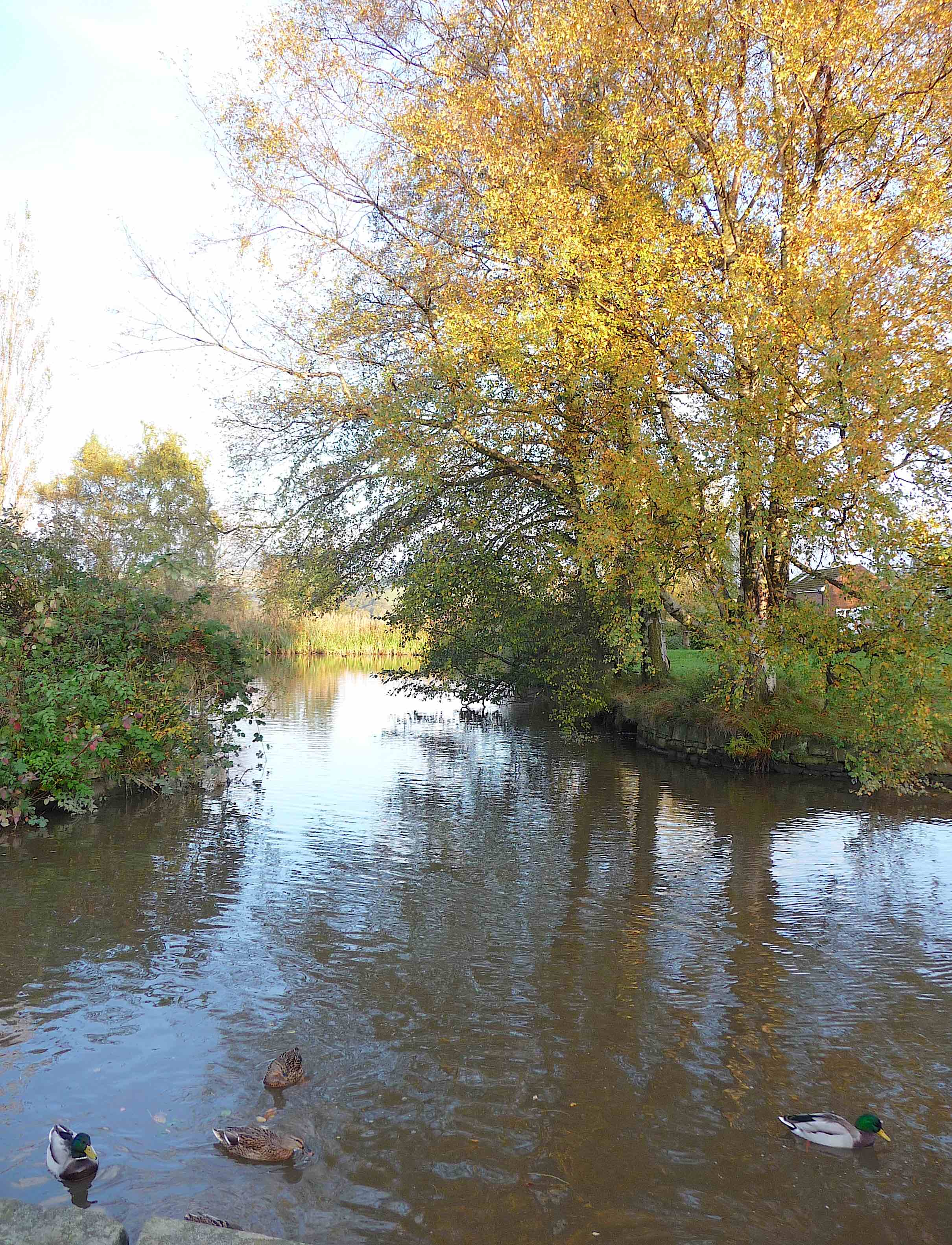 17.Peak Forest Canal