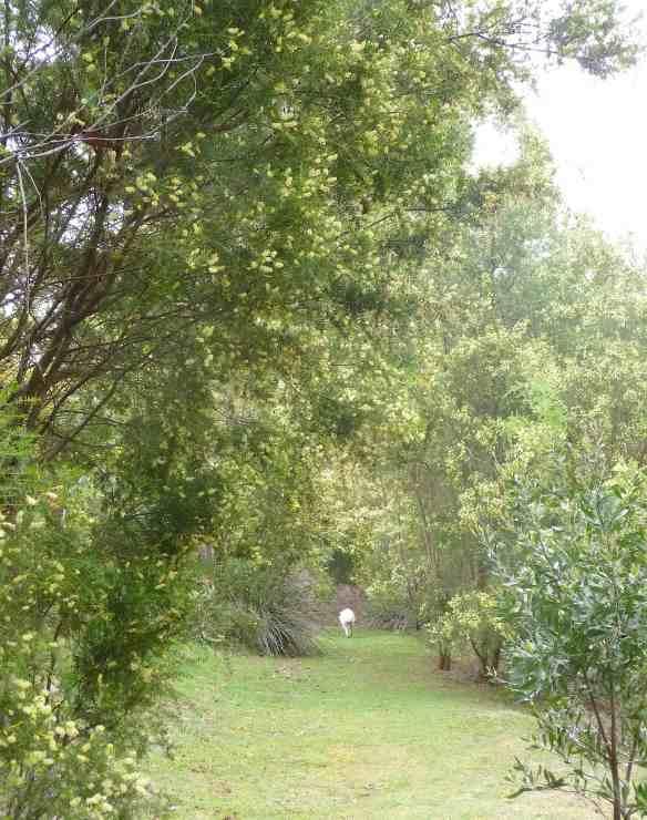 3.forest walk