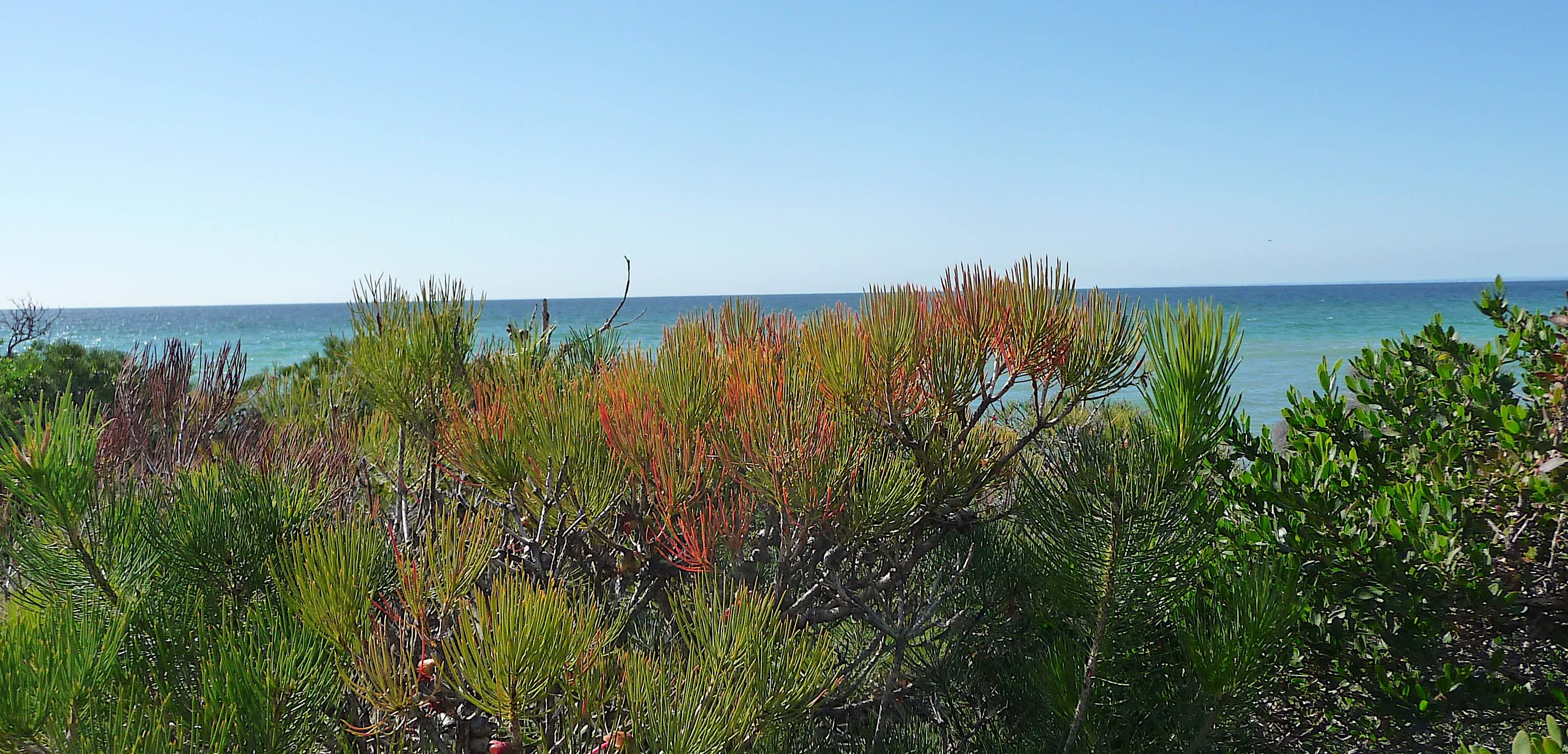14.Geographe Bay