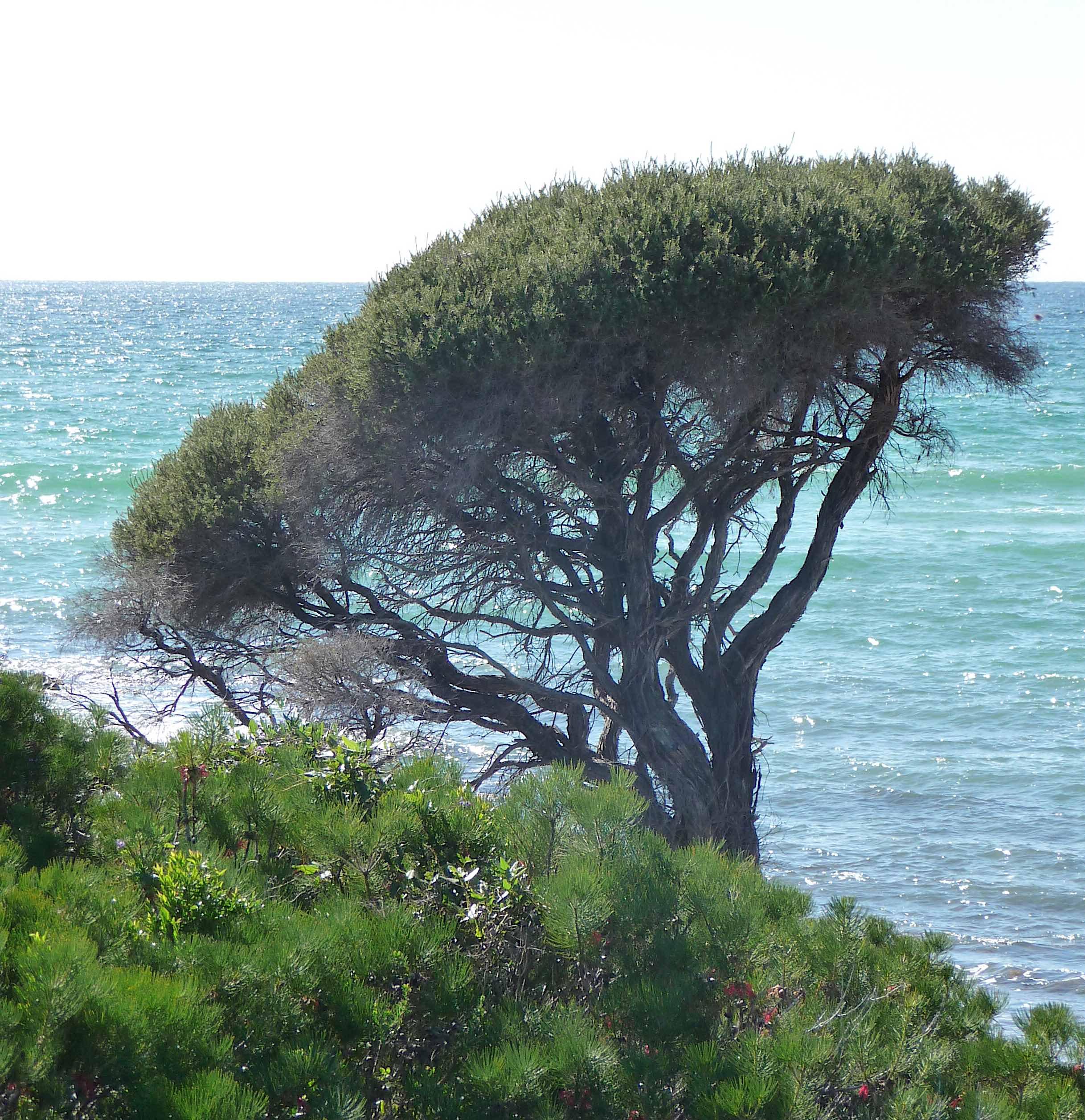 18.Geographe Bay