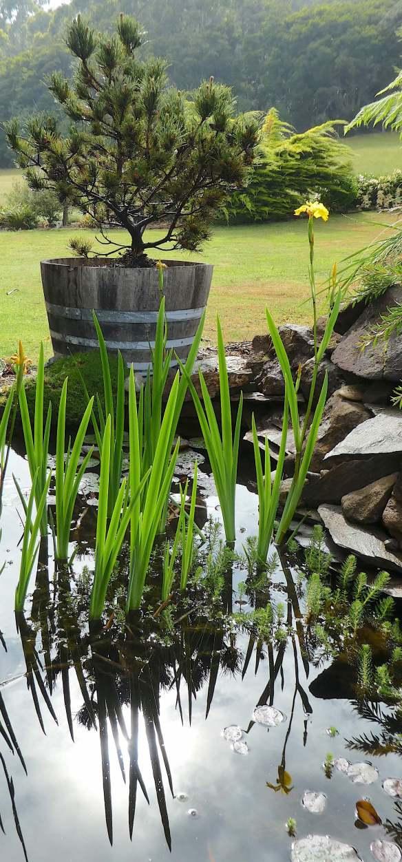 1.water irises