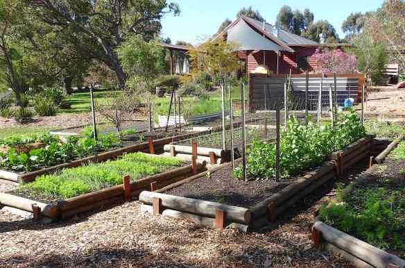9.veggie patch