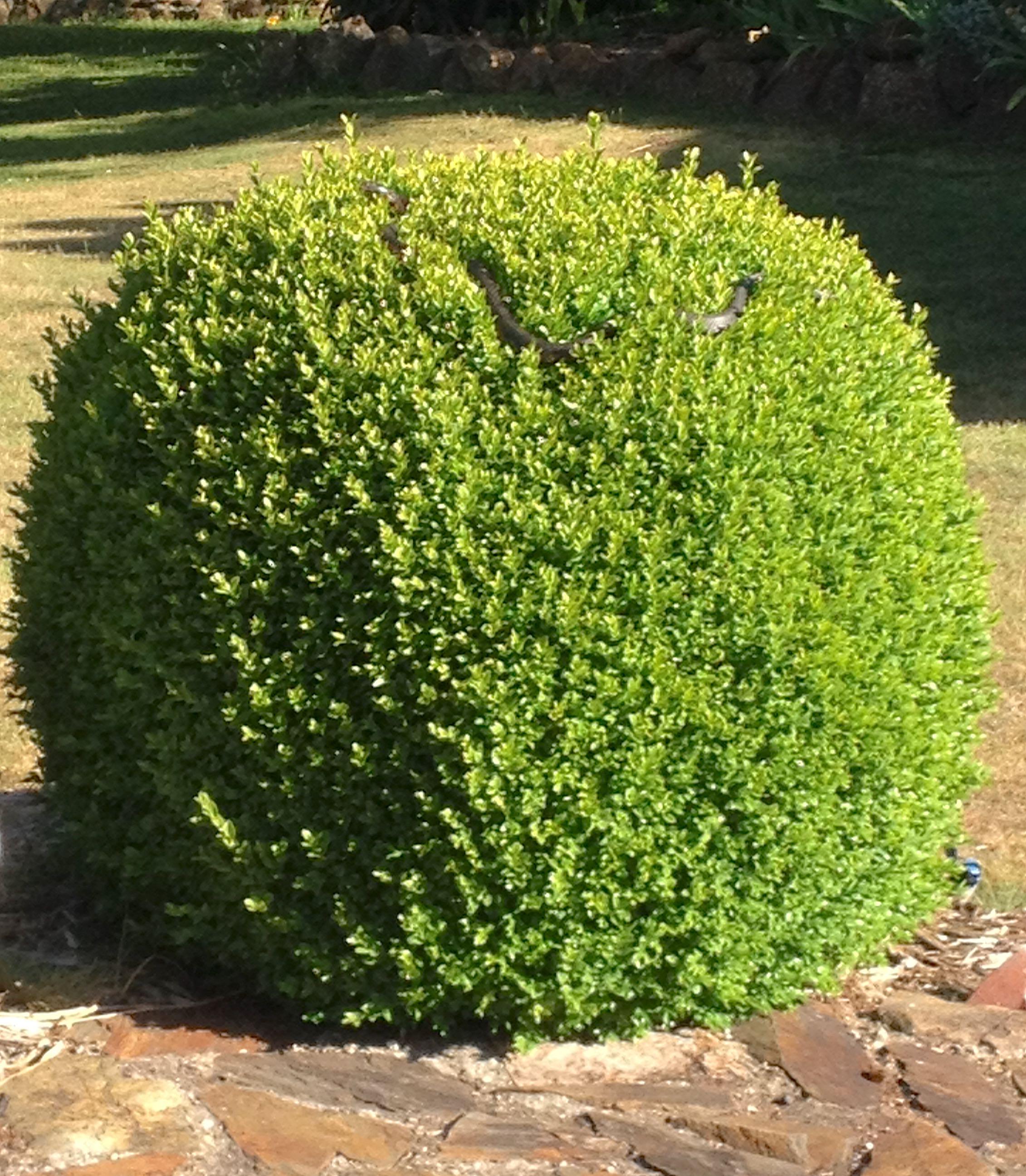 1.snake atop bush