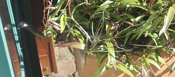 7.in pot plant