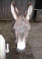 17.donkey