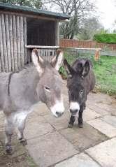 18.donkeys