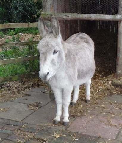 19.donkey