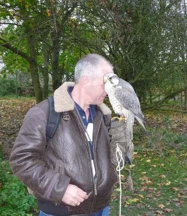 20.peregrine falcon