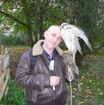 21.peregrine falcon