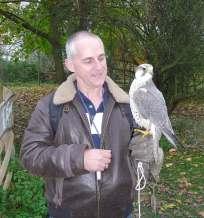 22.peregrine falcon