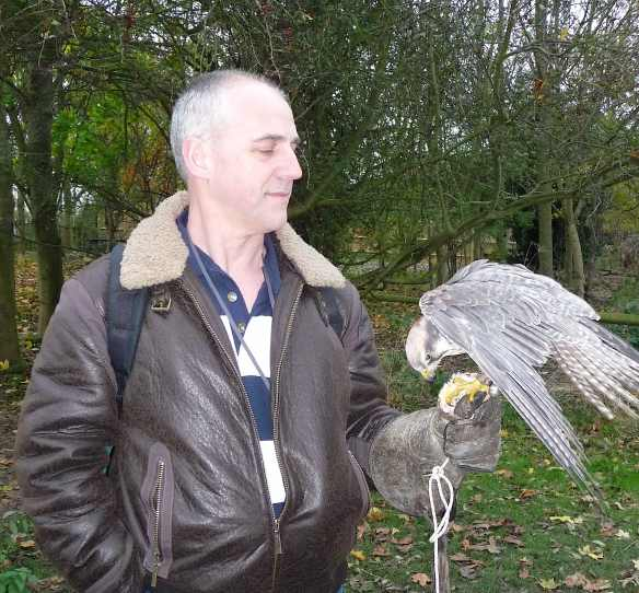 23.peregrine falcon