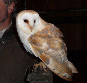 27.barn owl