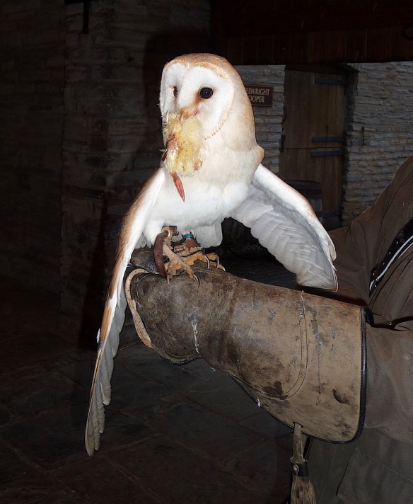 28.barn owl