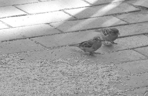25.birds
