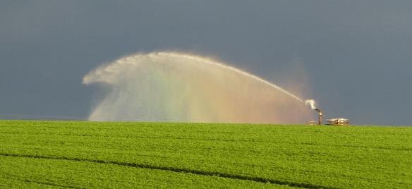 6.irrigator