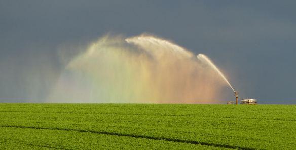 8.irrigator