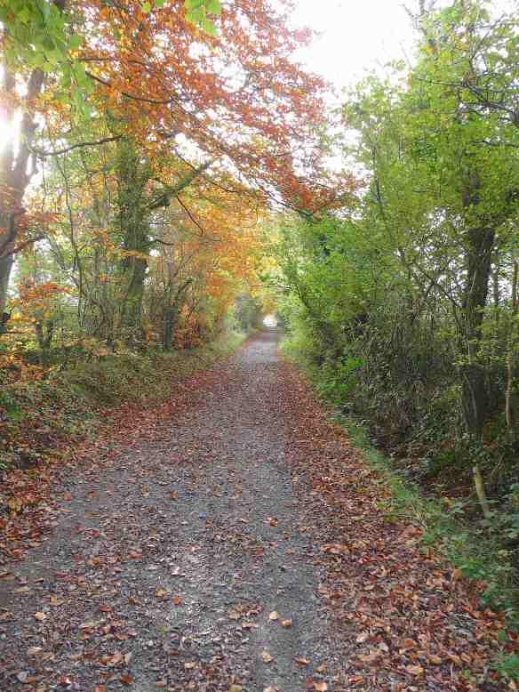 9.Grand Canal walk, Edenderry