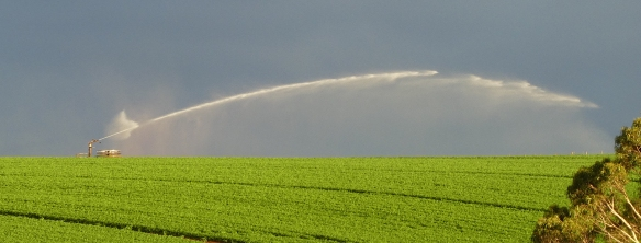9.irrigator