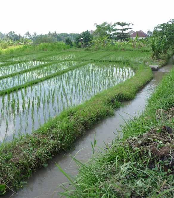 12.irrigation