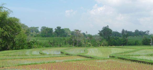 13.irrigation
