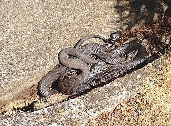 2.sunny snakes