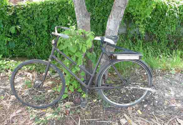 24.cycle