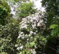 32.garden