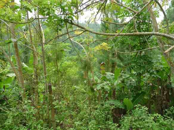 10.jungle