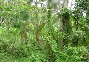 12.jungle