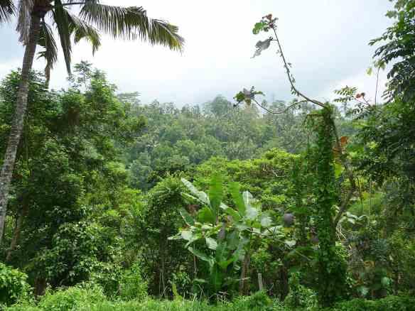 13.jungle
