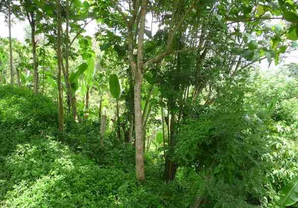 14.jungle