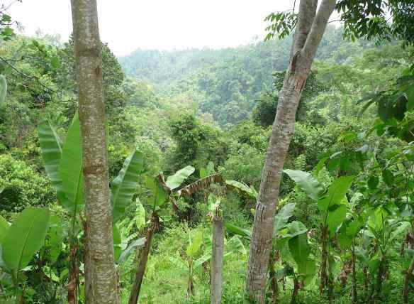 15.jungle