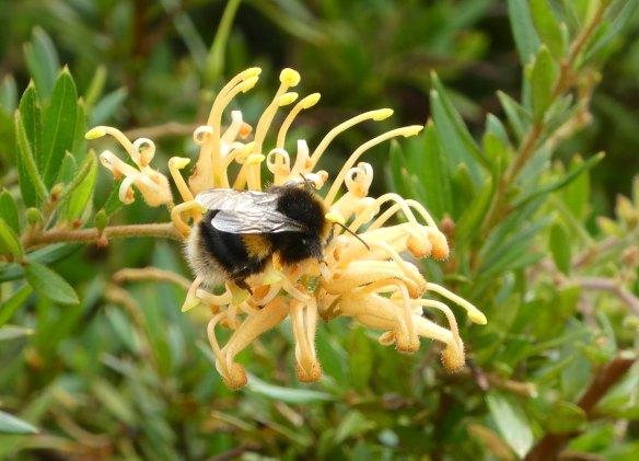 2.bumble bee