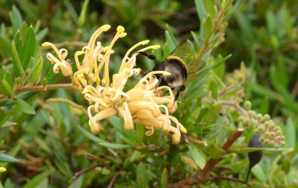3.bumble bee