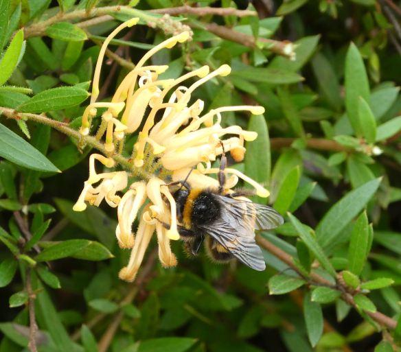 5.bumble bee