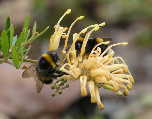 7.bumble bee