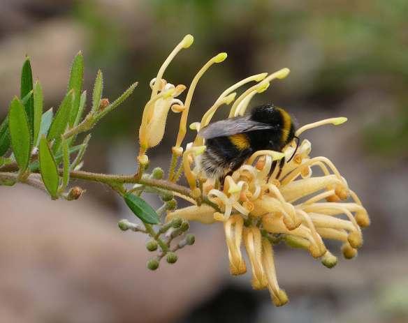 8.bumble bee