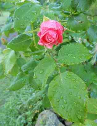 34.garden