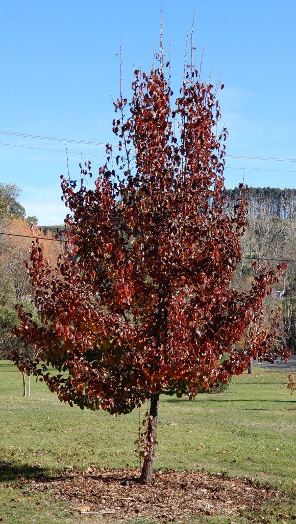 10.autumn tree