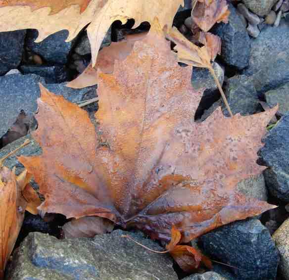 11.autumn leaves