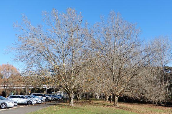 5.autumn trees