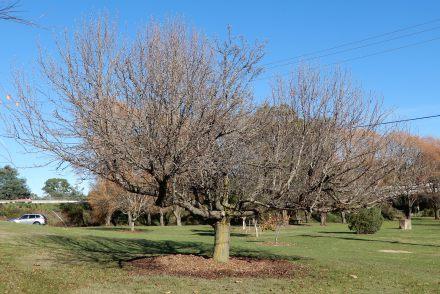 6.autumn tree