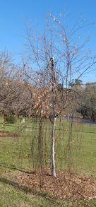 7.autumn tree